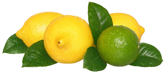 Limes and lemons.
