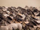 Fototapete Herde - Staub - Andere