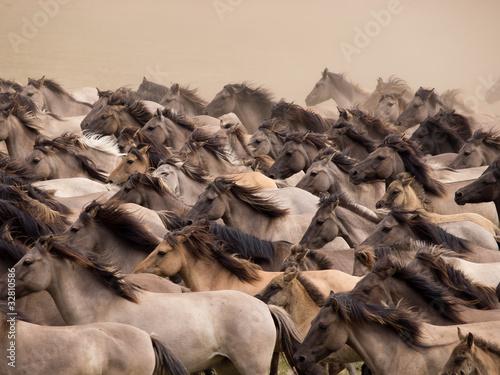 Fototapeten,pferd,säugetier,herde,staub