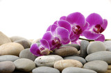 Fototapety Brunch pink orchid on pebbles