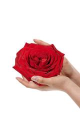 mano con rosa
