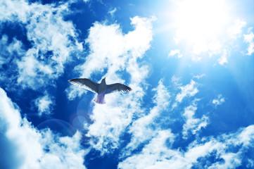bird in sun