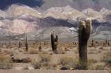 parco nazionale Los Cardones nelle ande argentine
