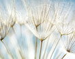 Abstract dandelion flower background - 32821180