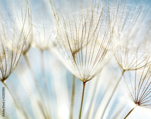 Aluminium Textures Abstract dandelion flower background