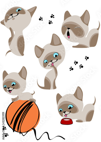 Poster Katten cheerful Siamese kittens 2. Similar in a portfolio
