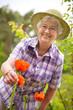 Senior Frau mit Mohnblumen