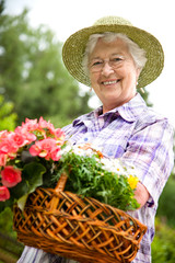 Senior woman with a basket of  flowers in her garden