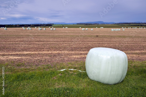 Silage on harvested field
