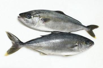 pesce ricciola
