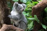 Fototapete Teddy - Süss - Säugetiere