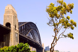 Sydney harbor bridge and iconic gumtree
