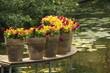 Macetas de flores sobre estanque