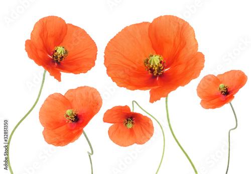 Papiers peints Poppy Poppies