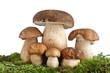 Boletus Edulis mushrooms - Funghi porcini
