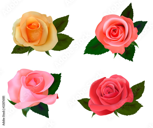 Set with a beautiful roses. Photo-realistic vector.