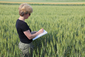 Agronomy expert inspecting wheat field