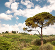 Hills Breganze - Veneto - Italy