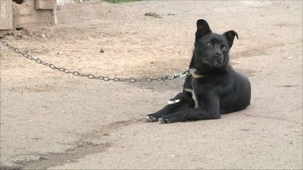 собака в селе
