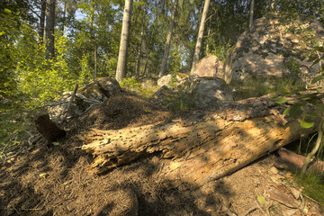 Ant hill in sunlit area