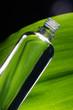 Massage Öl mit Blatt im Hintergrund