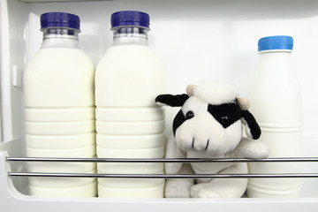 Bottles of fresh milk in the fridge with a cow