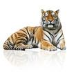 Fototapeten,tiger,katzenartig,tier,savage