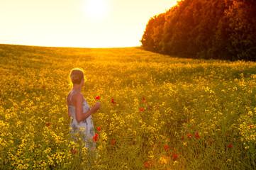 Abend über den Feldern