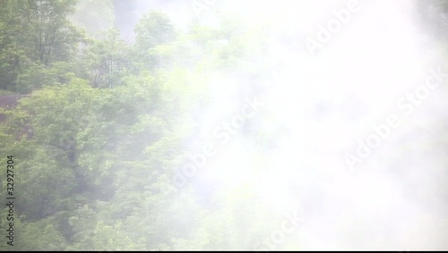Long shot of fog rising and swirling above forest