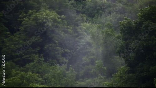 Fog rising and swirling in the forest, hd