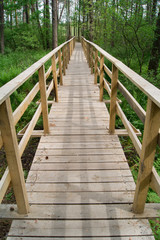 Footbridge over the swamp