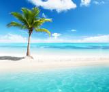 Fototapety palm on island