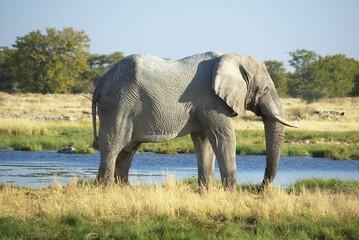 Elefant in Etosha