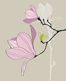 Fototapety Card with stylized magnolia