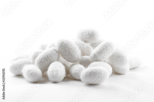 Silk Cocoons - 32956392