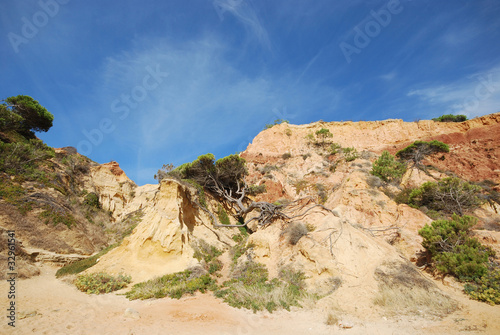 Pine and red cliffs(Algarve,Portugal)