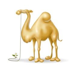 cammello docile