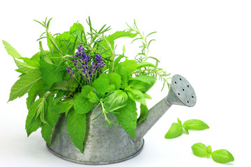 herb which is in the sprinkling can