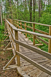 Footbridge over the swamp 2