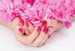 Woman cupped hands with pink manicure holding a flower
