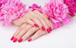Manicure with pink fingernails and peony flowers