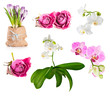 Beautiful fresh and dry flowers set on white background