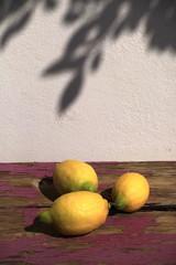 Früchte 20