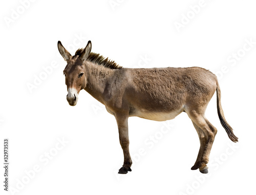 Foto Spatwand Ezel Donkey