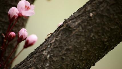 Ant Macro Shot w Blossoms