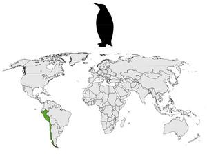Humboldt-Pinguin Verbreitungskarte