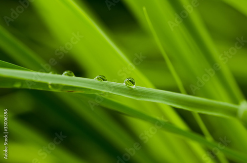 water green leaf - 33006396