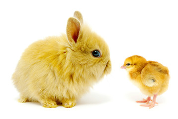rabbit and chick