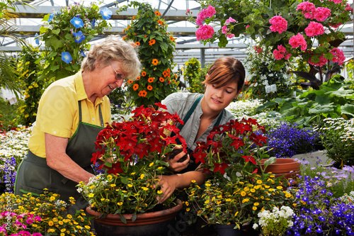 young and senior female gardener in the greenhouse