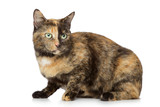 when should you get your male cat neutered